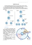 divisão celular resumo