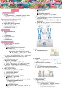 Sistema sensitivo e Nervos perifericos