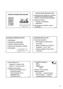 Tristeza Parasitária Bovina - 2º 2013