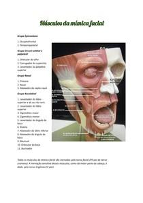 Músculos da mímica facial