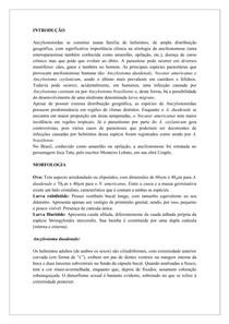 Ancylostomidae resumo