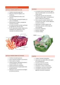 Organelas Celulares 2