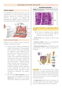 Histologia da Parede Intestinal