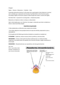 Noçoes de Embriologia