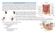 Anatomia do sistema urinário