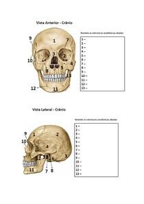 Exercicio Anatomia   Ossos