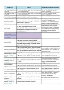 Correlação de Neuroanatomia - Estrutura e Função