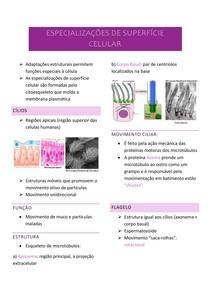 Resumo citologia: especializações de superfície celular