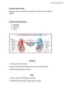 Sist Circulatório - Artérias