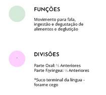 ANATOMIA DA LÍNGUA- ASPECTOS GERAIS