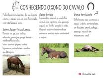 CONHECENDO O SONO DO CAVALO