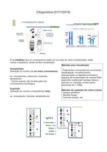 Aneuploidia e euploidia
