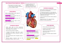 Mapa mental coração (anatomia)