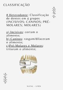 Anatomia do dente - Classificação