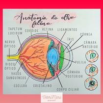 Anatomia do olho felino