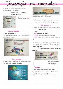Transcrição em eucariotos