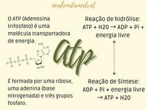 ATP - Bioquímica