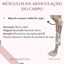 Músculos da articulação do carpo - Anatomia Veterrinária