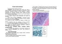 histologia - TECIDO CARITLAGINOSO