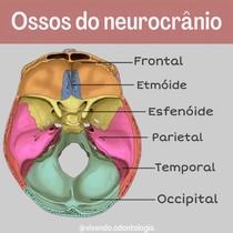 ossos do neurocrânio