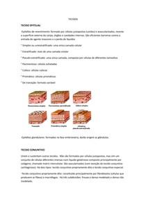 TECIDOS docx