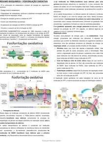 RESUMO BIOQUIMICA FOSFORILAÇÃO OXIDATIVA