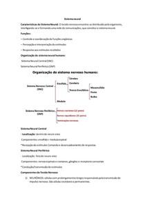 Sistema neural