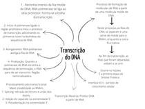 Transcrição DNA