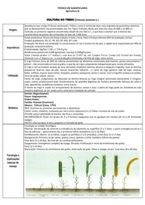 Cultura do trigo- Agricultura- Agronomia