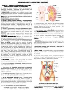 O funcionamento do sistema urinário