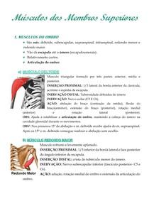 Músculos Membros Superiores