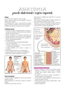 Anatomia - Parede abdominal e região inguinal