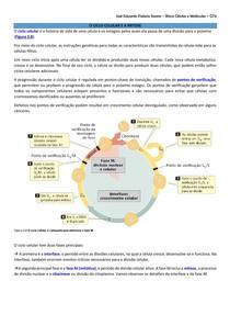 Ciclo celular, mitose e meiose