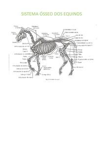Sistema ósseo dos equinos