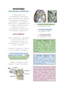 Anestesiologia : Considerações anatômica