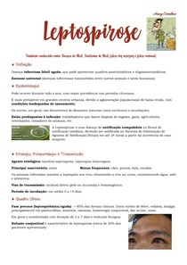 Leptospirose - Anny Caroline