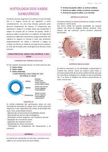 Resumo_Vasos Sanguíneos