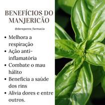 Benefícios do Manjericão