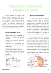 Sistema Urinário - Anatomia e Formação da Urina
