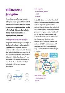 Metabolismos energéticos