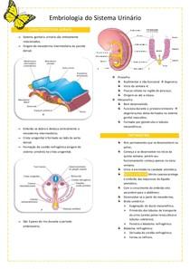 Embriologia do Sistema Urinário-resumo