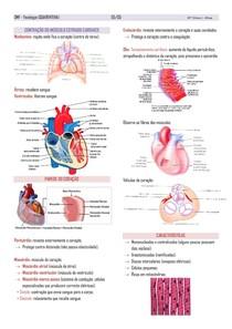 Contração do músculo estriado cardíaco