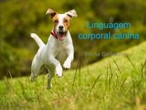 1) Linguagem corporal canina