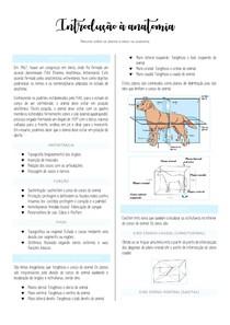 Anatomia Estrutural: Eixos e Planos