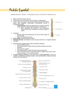 NEUROANATOMIA - MEDULA ESPINHAL