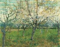 Vincent Willem van Gogh-pomar-com-Florescer-Apricot-Trees