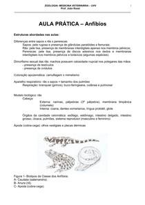 Roteiro Zoo- Anfibios