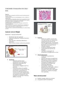 Histologia - Sistema Urinário: Histologia do Rim, Ureter, Bexiga e Uretra