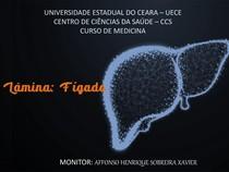 LÂMINA DE FÍGADO - 2020 - ATUALIZADO