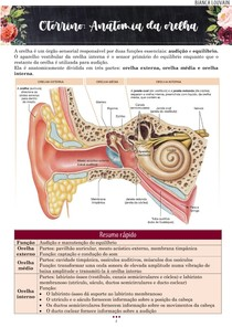 Otorrino: anatomia da orelha